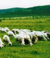 上海牛羊肉