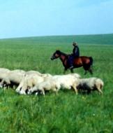 北京牛羊肉